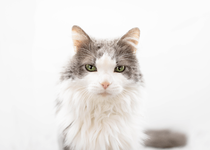 Cat Photography Portrait